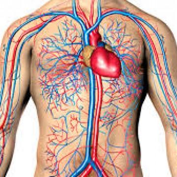Registros de doenças do sistema circulatório aumentam cerca de 30% no verão
