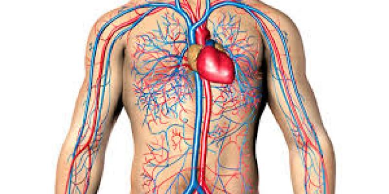 Angiologista explica com o calor há o aumento da dilatação dos vasos com o calor