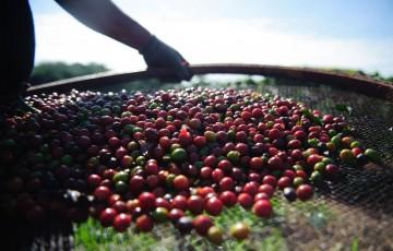 Quebra da safra e exportações devem elevar o preço do café em até 40%