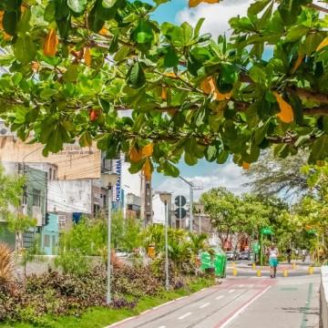 Prefeitura de Caruaru vai treinar egressos do sistema prisional para atuarem como jardineiros nas áreas verdes do município