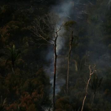 Ministério confirma recursos para combate a desmatamento na Amazônia