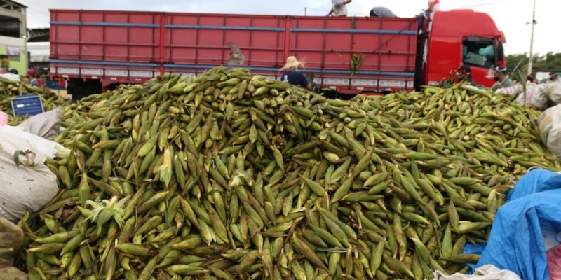 De acordo com os comerciantes, a procura do principal ingrediente junino, o milho, já registrou um aumento de 20% no mês de maio