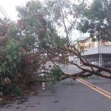 Ventos fortes e queda de árvore após chuvas são registradas na RMR
