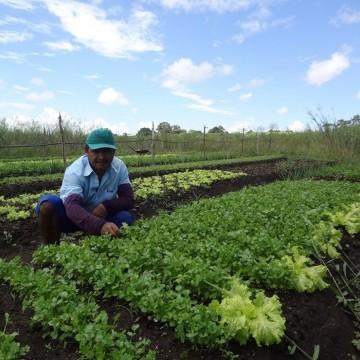Lei Estadual que beneficia agricultores familiares deve contemplar mais de um milhão de produtores