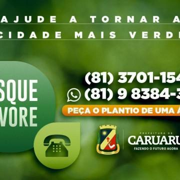 Delivery de árvores em Caruaru