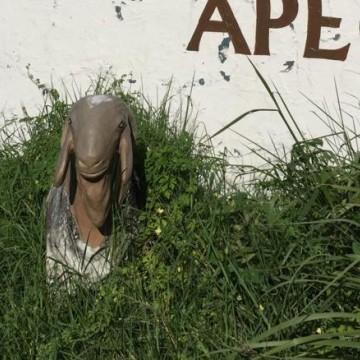 Exposição de animais do Cordeiro pode não acontecer este ano