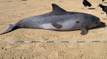 Golfinho é encontrado morto em praia nordestina