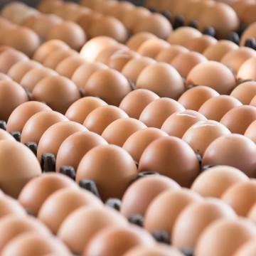 Produção de ovos para o consumo esteve elevada em 2019