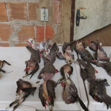 Polícia Federal apreende 24 animais silvestres mortos e quatro galos feridos
