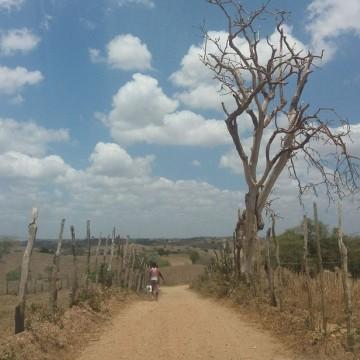 Aumenta a intensidade da seca no Agreste pernambucano