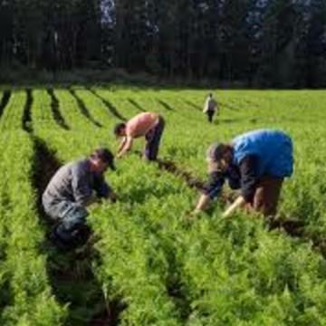 Agricultores já podem se cadastrar no Garantia Safra