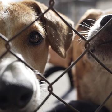 Lei estadual obriga condomínios a denunciar ocorrências ou indícios de maus-tratos contra animais