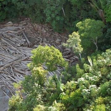 Esgotamento dos recursos naturais: impactos e consequências do consumismo no meio ambiente