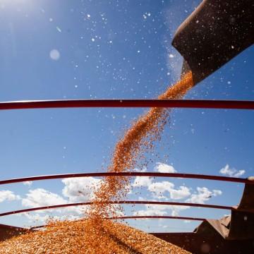 Companhia Nacional de Abastecimento prevê produção recorde de grãos na safra 2020/21