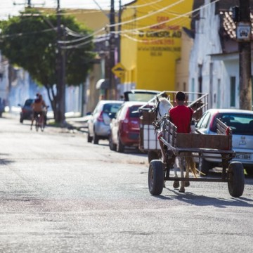 Audiência no MPPE pretende discutir sobre transportes de tração animal no Recife