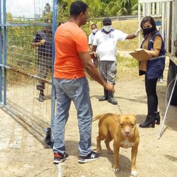 Pitbull que atacou menino de cinco anos é levado para Centro de Vigilância Animal de Jaboatão