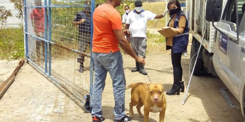 Desde 2008, uma lei municipal proíbe a criação de animais dessa raça. O cachorro, que atacou a criança com uma mordida no rosto, pertence ao dono do estabelecimento
