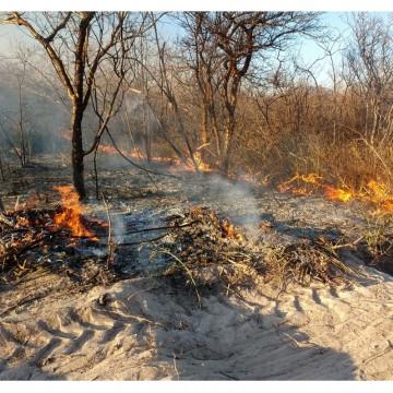 CBN Sustentabilidade: Incêndio no Sertão de Pernambuco