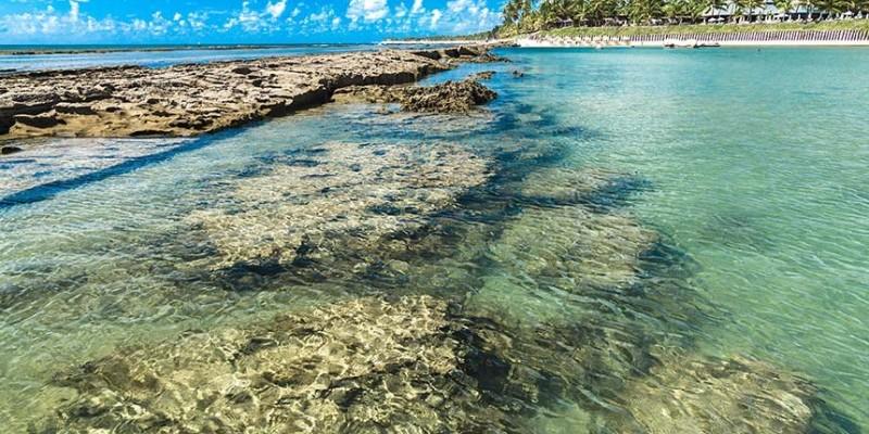 A preocupação é por conta da capacidade do coral-sol de causar impactos ecológicos e nocivos ao ecossistema marinho