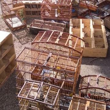 Operação apreende 162 aves silvestres vendidas ilegalmente no Recife