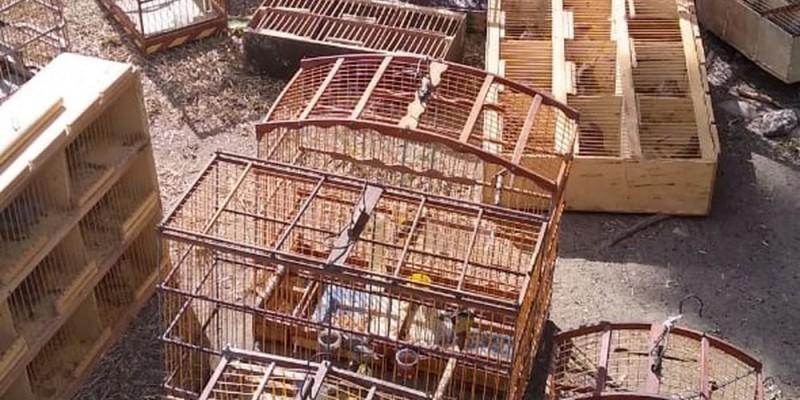 Os criminosos abandonaram os bichos e gaiolas e conseguiram fugir