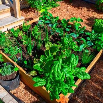 Sustentabilidade: Guia prático de como ter a própria horta em casa