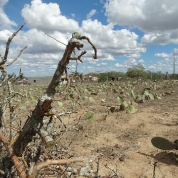 Semas lança estudo sobre áreas suscetíveis à desertificação em Pernambuco