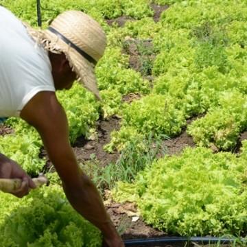 Petrolina recebe lotes para expansão da agricultura irrigada