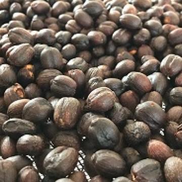 Produtora de café orgânico, Taquaritinga do Norte perde mercado devido à seca