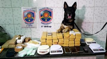 Polícia apreende 28,5 Kg de maconha em Caruaru e Agrestina