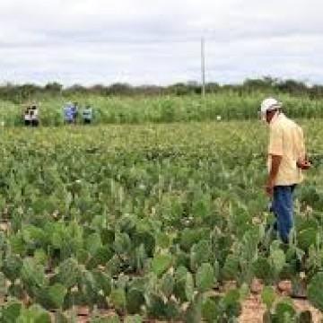 Prejudicados pela pandemia, agricultores esperam que programa estadual de aquisição de alimentos saia do papel