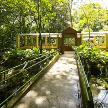 Com novos protocolos de segurança, Jardim Botânico do Recife reabre nesta sexta-feira (11)