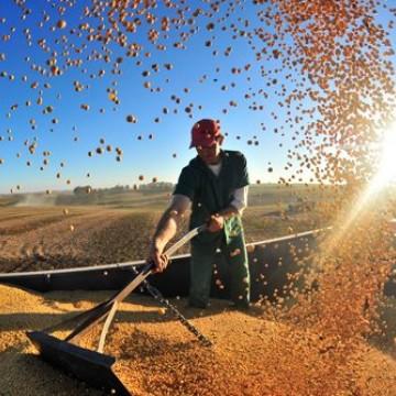 Agronegócio tem recorde em exportações no mês de junho