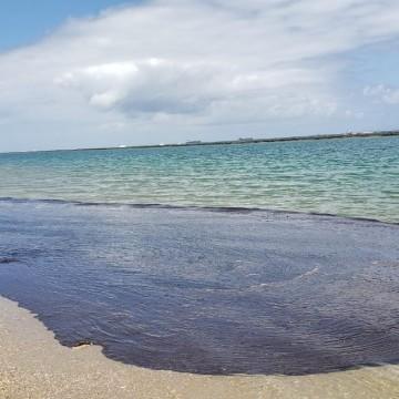 Mais de 600 toneladas de resíduos são retiradas das praias do nordeste