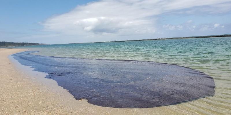 O secretario de Meio Ambiente, José Bertotti, critica a pouca efetividade do plano de contengenciamento no avanço do oleo nas praias no Estado.
