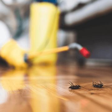 """""""Aparecimento de pragas é consequência dos atos humanos no meio ambiente"""", diz biólogo"""