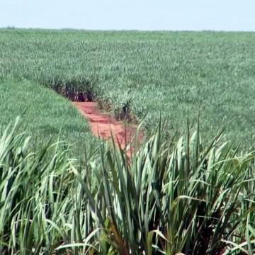 Cooperativa do Agronegócio dos Fornecedores de Cana apresenta recorde em safra
