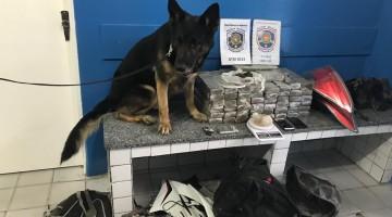 Polícia apreende 50 kg de maconha em Gravatá