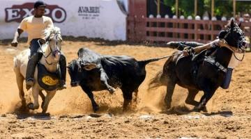 Eventos de vaquejada podem acontecer sem público em Pernambuco