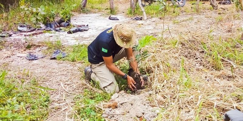 Entre as árvores plantadas estão Pau-Brasil, Craibeiras, Ipê Amarelo