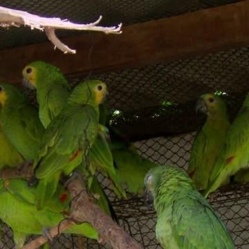 Cetas Tangará inicia 2020 com mais de 50 novos animais