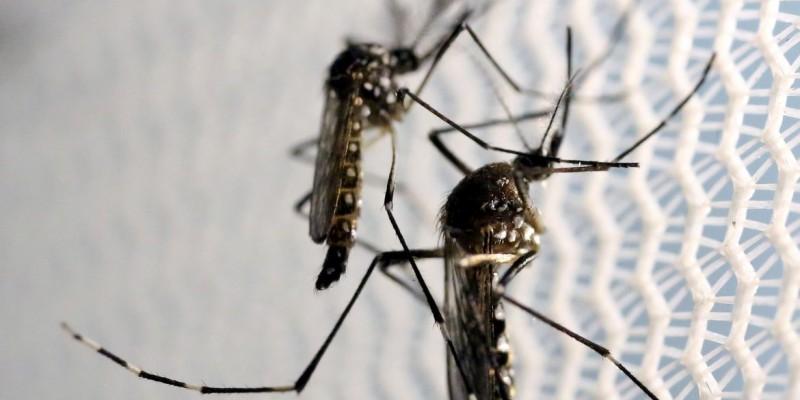 De janeiro a novembro Brasil teve 971.136 casos prováveis de dengue
