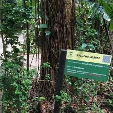 Jardim Botânico do Recife categoriza espécies ameaçadas de extinção