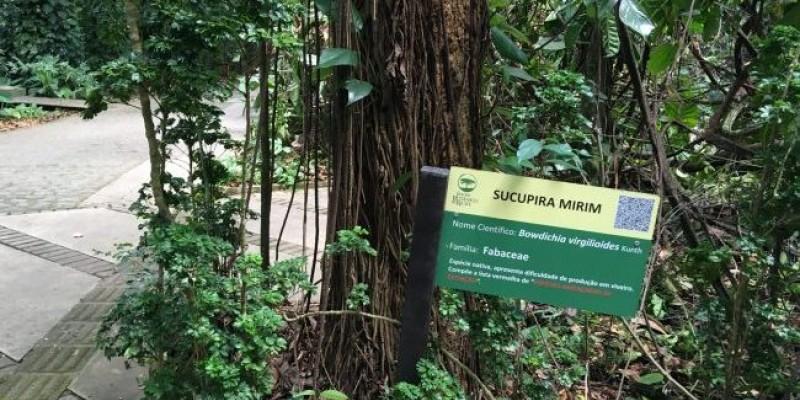 Pau-brasil, sucupira e coquinho são algumas das plantas que os visitantes podem conhecer durante caminhada ecológica pelo espaço