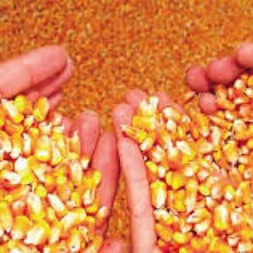 Agricultores do Sertão recebem 530 toneladas de sementes