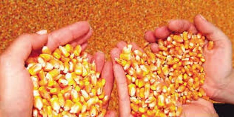 Cerca de 75 mil famílias de agricultores devem ser beneficiadas