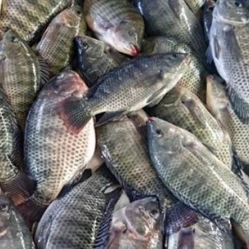 Com a chegada da Semana Santa, a Vigilância Sanitária reforça fiscalização dos pescados