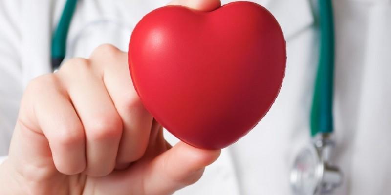 Um dos Órgãos mis importantes do Corpo humano.