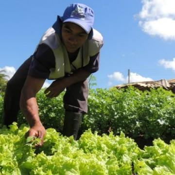 Governo estadual amplia isenção do ICMS sobre produtos da fruticultura
