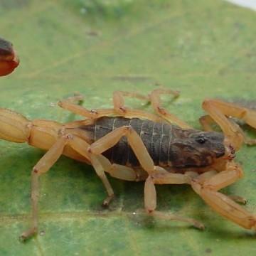 CBN Sustentabilidade: Cuidado com escorpiões
